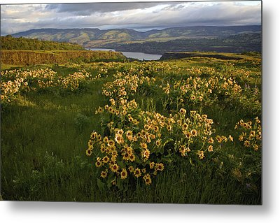 Wildflowers At Dawn On The Columbia Gorge Metal Print