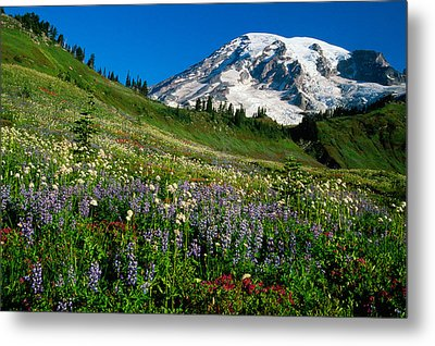 Wildflowers Blooming In Front Of Snowy Metal Print by Panoramic Images