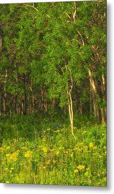 Metal Print featuring the photograph Wildflowers Glacier National Park Montana by Ram Vasudev