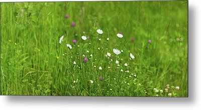 Wildflowers In A Field, Gooseberry Metal Print