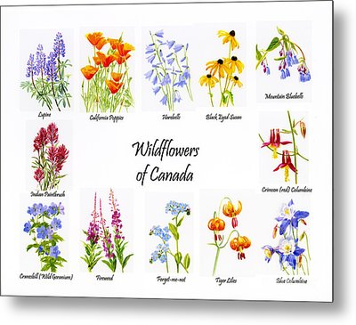 Wildflowers Of Canada Poster Metal Print