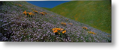 Wildflowers On A Hillside, California Metal Print by Panoramic Images