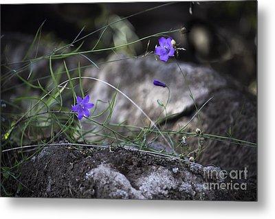 Wildflowers On Rocks Metal Print