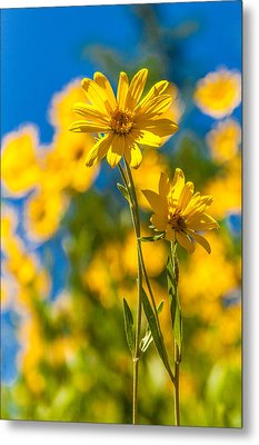 Wildflowers Standing Out Metal Print