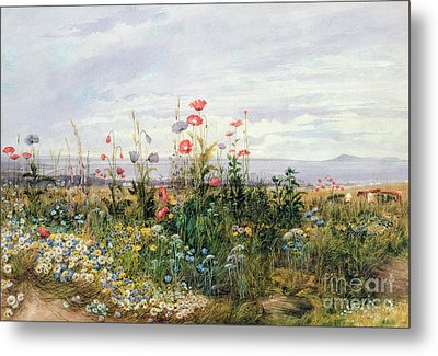 Wildflowers With A View Of Dublin Dunleary Metal Print by A Nicholl