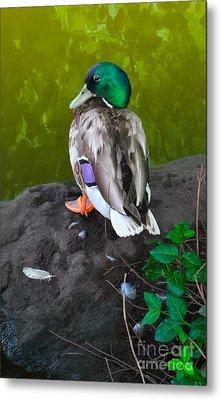 Wildlife In Central Park Metal Print