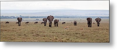 Wildlife On The Masai Mara - Kenya Metal Print by June Jacobsen
