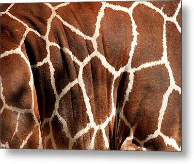Wildlife Patterns  Metal Print