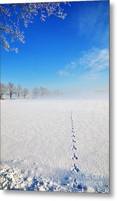 Metal Print featuring the photograph Wildlife Tracks by Kennerth and Birgitta Kullman