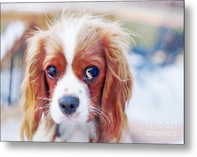 Will You Play With Me Metal Print by Kay Pickens