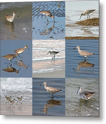 Willets Along The Shore Metal Print