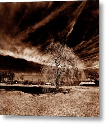Willow Metal Print