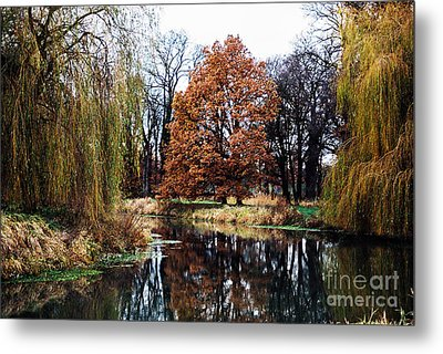 Metal Print featuring the photograph Willow Lake by Cassandra Buckley