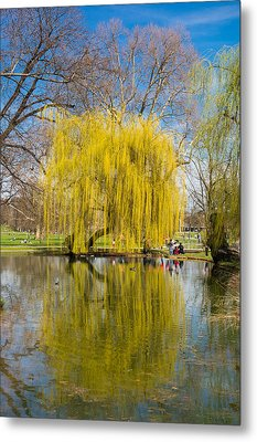 Willow Tree Water Reflection Metal Print by Matthias Hauser