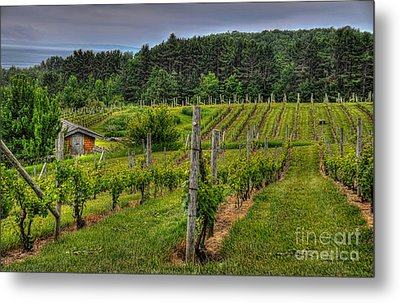 Willows Winery Metal Print by Trey Foerster
