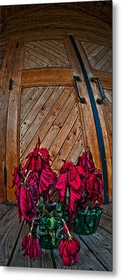 Wilted Metal Print by Murray Bloom