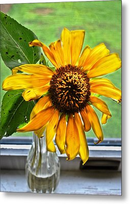 Wilting Sunflower In Window Metal Print by Greg Jackson