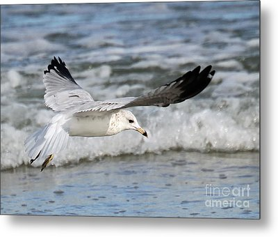 Wind Beneath My Wings Metal Print by Geoff Crego