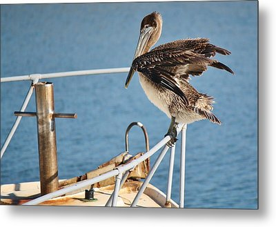 Wind Beneath My Wings Metal Print by Paulette Thomas