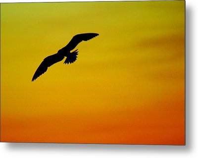 Wind Beneath My Wings Metal Print by Frozen in Time Fine Art Photography