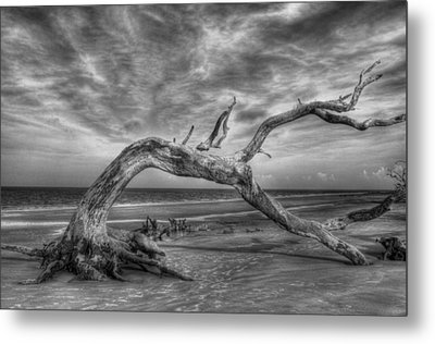 Wind Bent Driftwood Black And White Metal Print by Greg and Chrystal Mimbs
