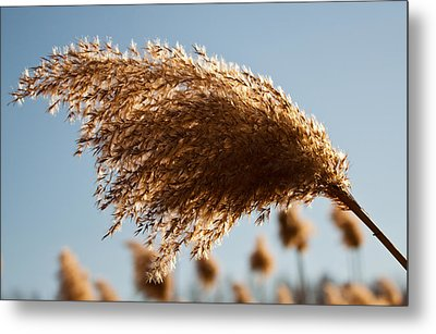 Metal Print featuring the photograph Wind Blown by David Stine