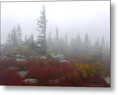 Wind Swept Pines Amongst The Foggy Mist Metal Print by Daniel Behm