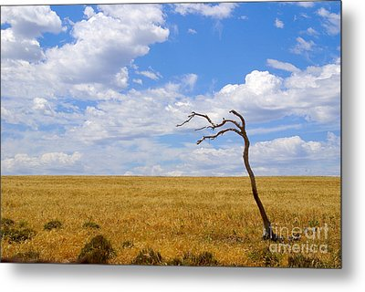 Wind Swept Metal Print by Serene Maisey