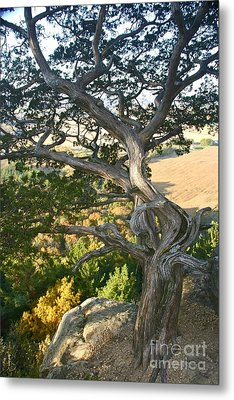 Wind Twisted Tree Metal Print