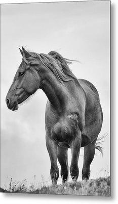 Windblown Horse Metal Print by Tracy Munson