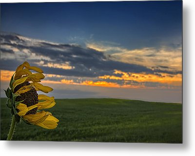 Windblown Metal Print