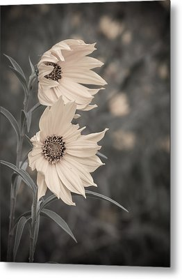 Metal Print featuring the photograph Windblown Wild Sunflowers by Patti Deters