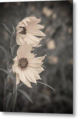 Windblown Wild Sunflowers Metal Print by Patti Deters