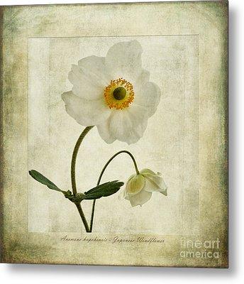 Windflowers Metal Print by John Edwards