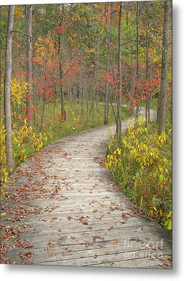 Winding Woods Walk Metal Print by Ann Horn