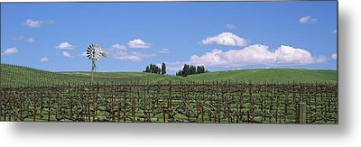 Windmill In A Vineyard, Napa County Metal Print by Panoramic Images