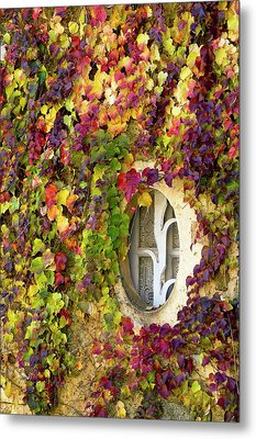 Window Covered In Virginia Creeper Metal Print by Bob Gibbons