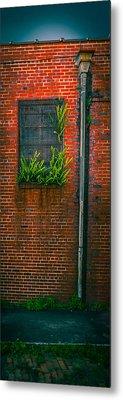 Window Weeds Metal Print by Ybor Photography