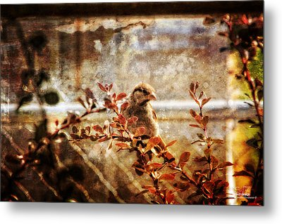 Window Wren Metal Print by Dan Quam