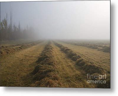 Windrows Metal Print by Mike  Dawson