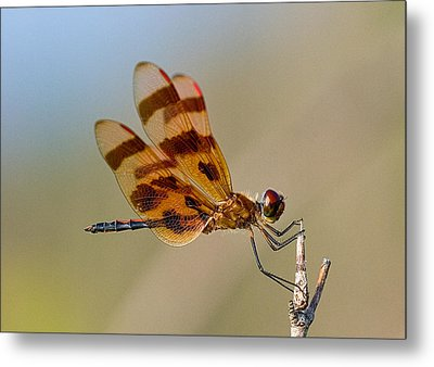 Windy Day Dragonfly Metal Print