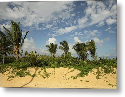 Windy Palms Metal Print by Mustafa Abdullah