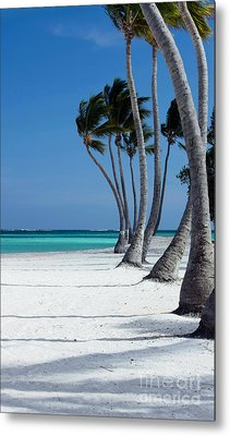 Windy Paradise Metal Print by Sophie Vigneault