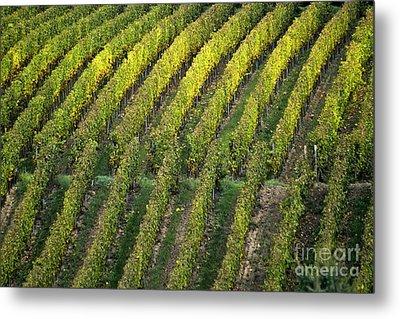 Wine Acreage In Germany Metal Print by Heiko Koehrer-Wagner