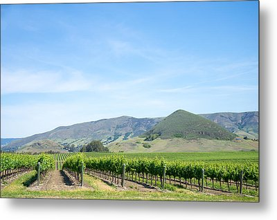 Wine Country Edna Valley Metal Print