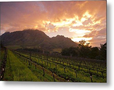Wineland Sunrise Metal Print by Aaron Bedell