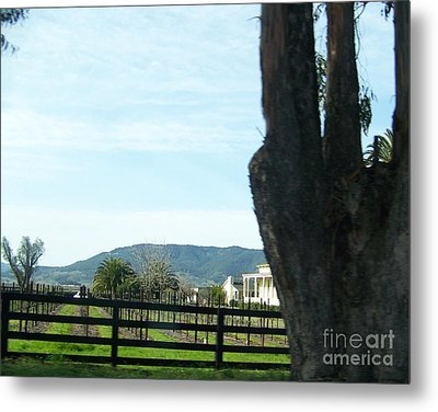 Metal Print featuring the photograph Winery by Bobbee Rickard