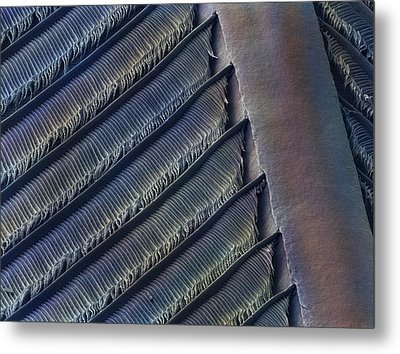 Wing Feather Detail Of Swallow Sem Metal Print by Science Photo Library