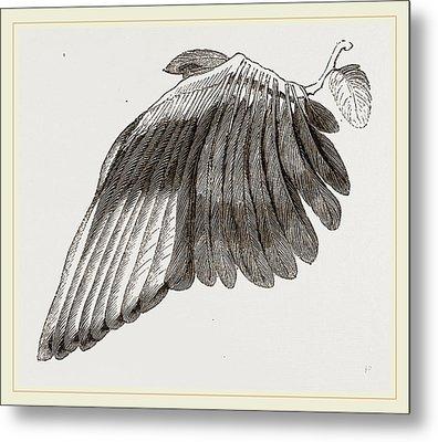 Wing Of Magpie Metal Print