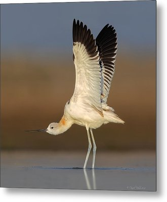 Metal Print featuring the photograph Wing Stretch by Daniel Behm